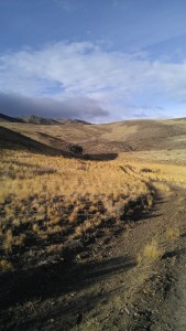 Fire road to west of Hunter Creek (2)