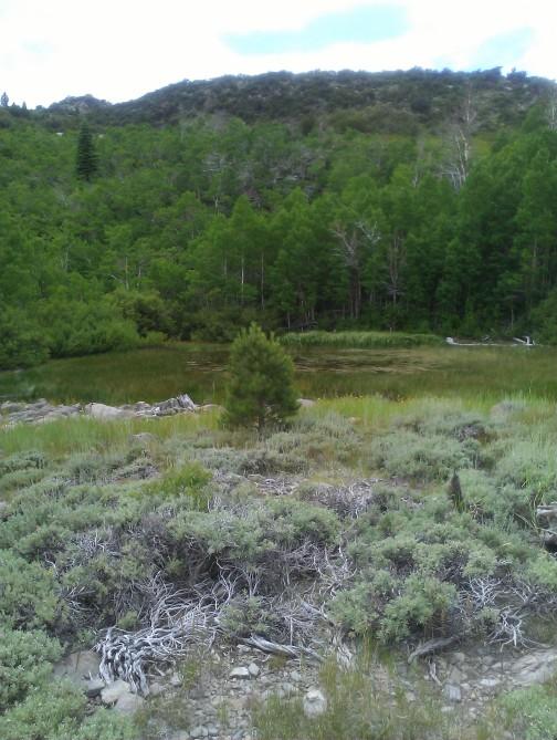 Pond below Hunter Lake above Hunter Creek drainage
