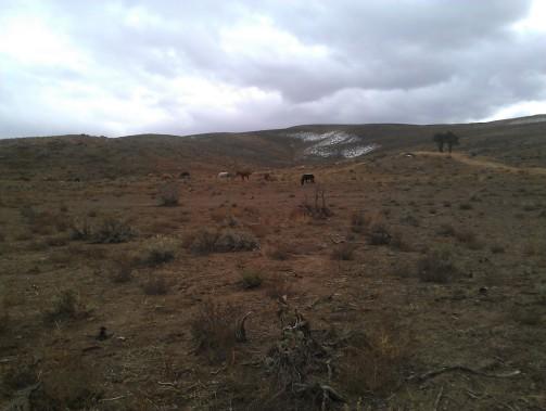 Wild Horses, Ophir Rd