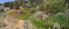 Spring in Eldorado Cyn created an unexpected oasis