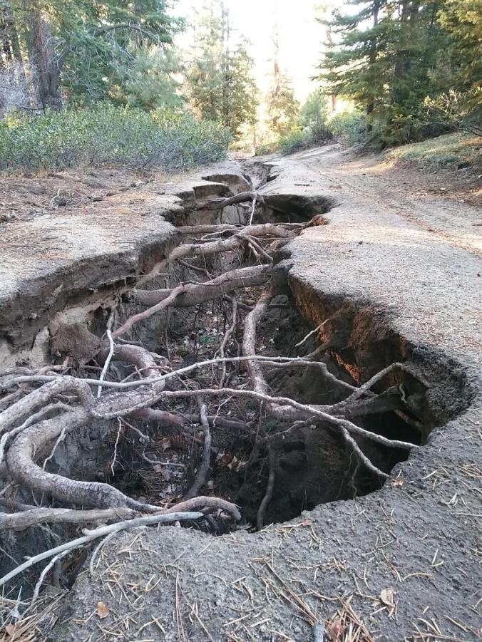Roots Rut 1