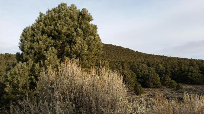 Pine Grove Hills