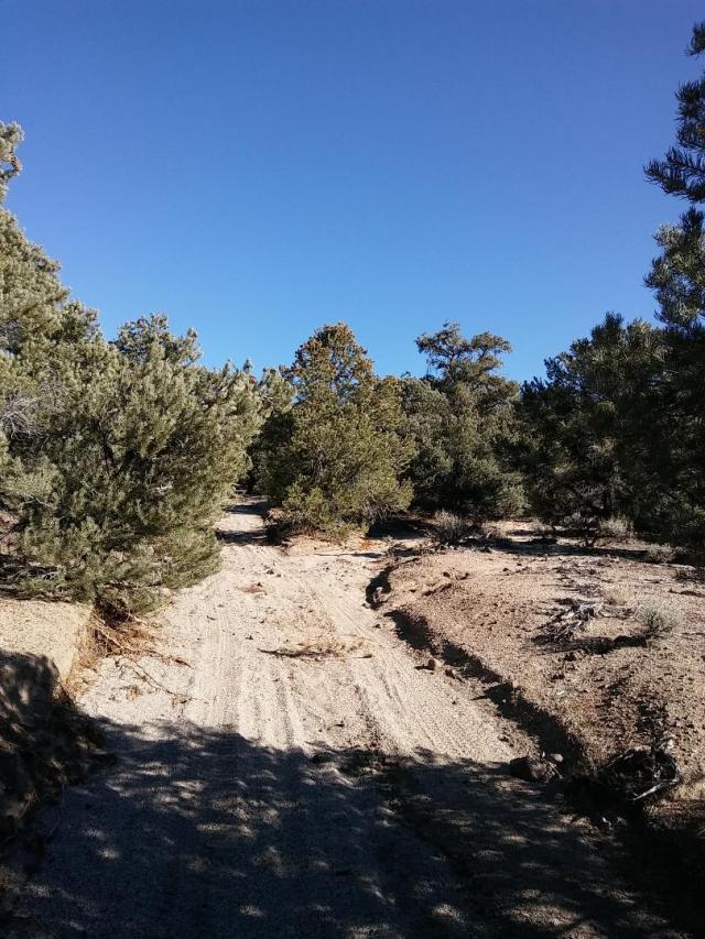 Road and creek took the same path